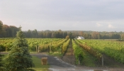 ontario-wine-tour_9_20091012_1733976019