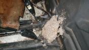 mouse_nest_c_3_20110228_1221945015